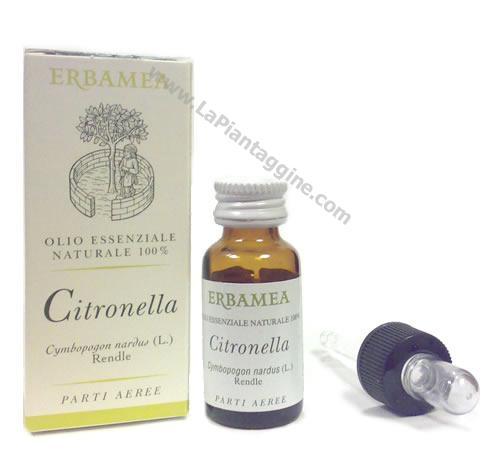 olio esenziale di Citronella