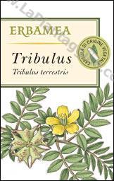 Tonici - Tribulus capsule