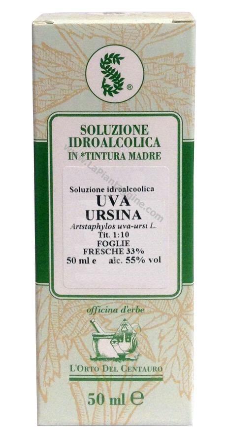 Uva Ursina