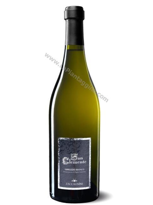 SAN CLEMENTE Abruzzo Bianco DOC Vino ZACCAGNINI